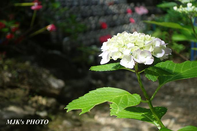 houfukuji6311.jpg