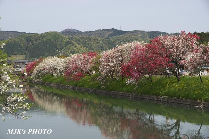 katsuragawa6125.jpg