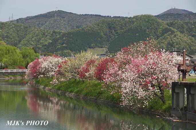 katsuragawa6133.jpg