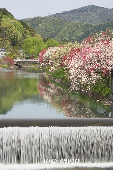 katsuragawa6134.jpg