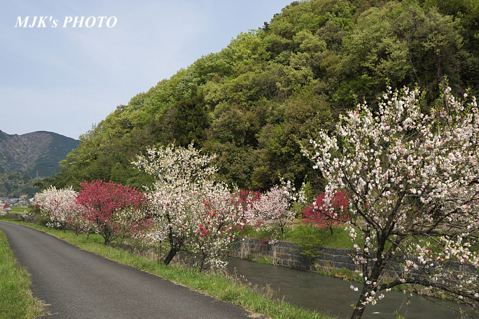 katsuragawa6136.jpg