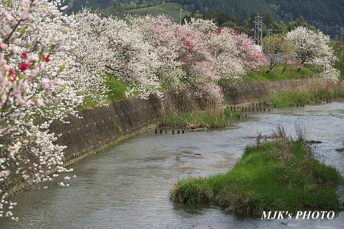 katsuragawa6137.jpg