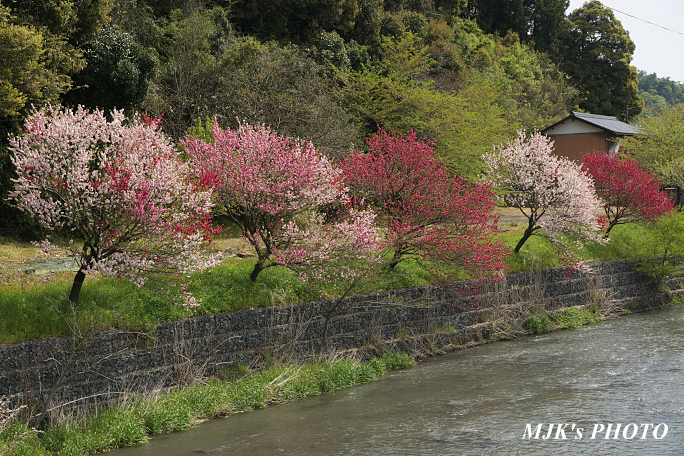 katsuragawa6139.jpg