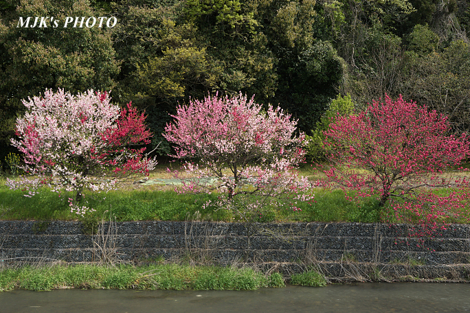 katsuragawa6140.jpg