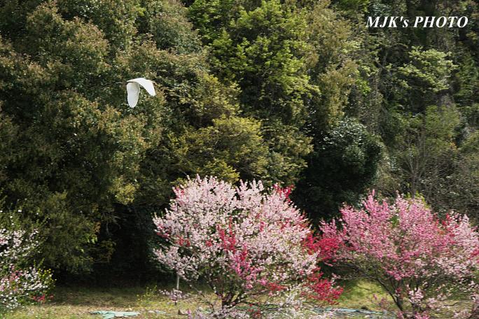 katsuragawa6142.jpg