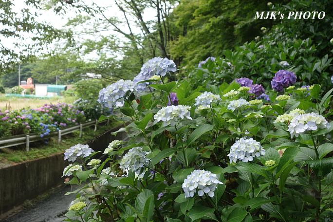 komichi6319.jpg