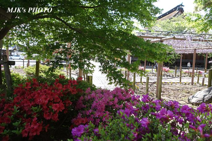 mandaraji6148.jpg