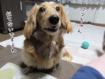 kinako4533.jpg