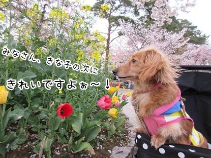 kinako4560.jpg