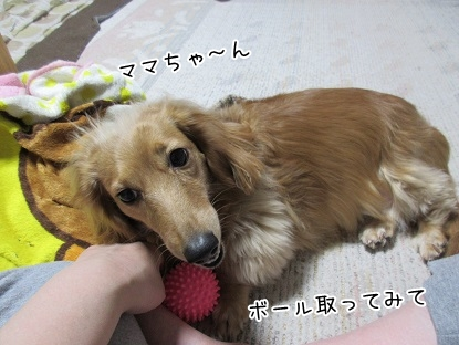 kinako4573.jpg