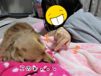 kinako4632.jpg