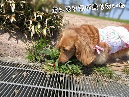 kinako4660.jpg