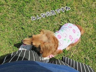 kinako4663.jpg