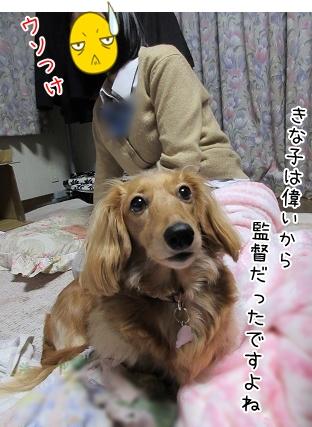 kinako4665.jpg