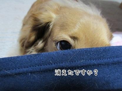 kinako4687.jpg