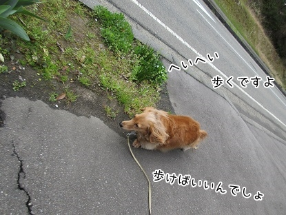 kinako4690.jpg