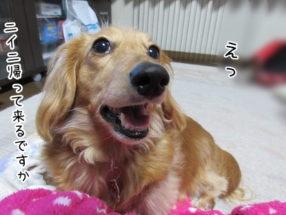 kinako4714.jpg