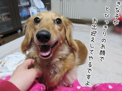 kinako4715.jpg