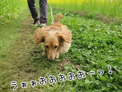 kinako4721.jpg