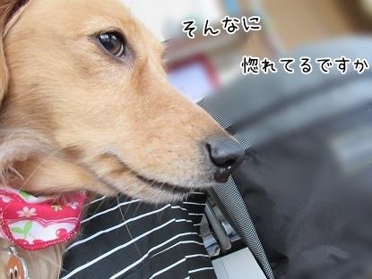 kinako4755.jpg