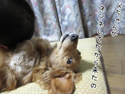 kinako4985.jpg