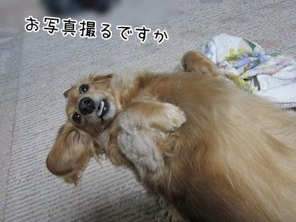 kinako4994.jpg