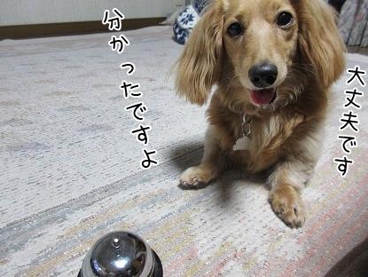kinako5003.jpg