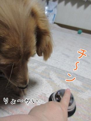 kinako5004.jpg