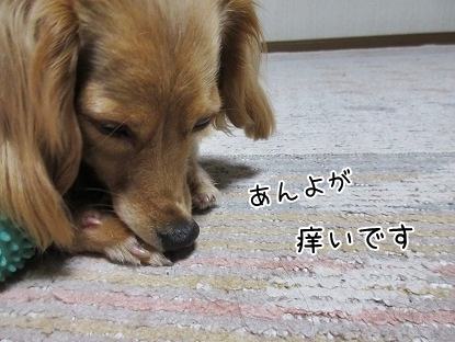 kinako5016.jpg