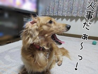 kinako5029.jpg