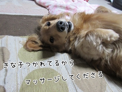 kinako5041.jpg