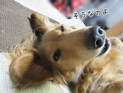 kinako5043.jpg