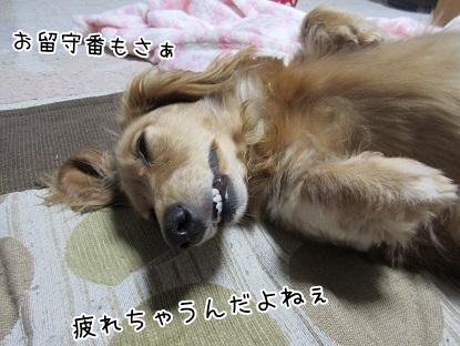 kinako5044.jpg