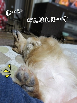 kinako5056.jpg