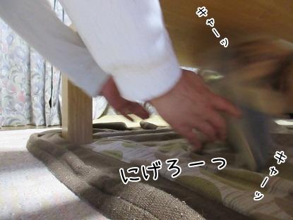 kinako5166.jpg