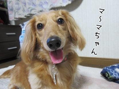 kinako5173.jpg