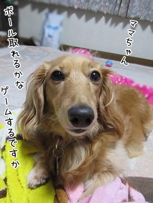 kinako5200.jpg