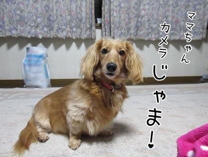 kinako5236.jpg
