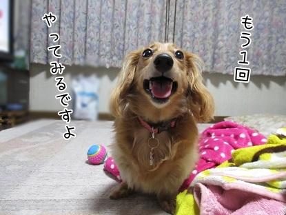 kinako5241.jpg