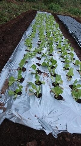 2018.10.20菜園4