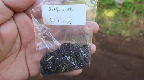 2018.10.20菜園15