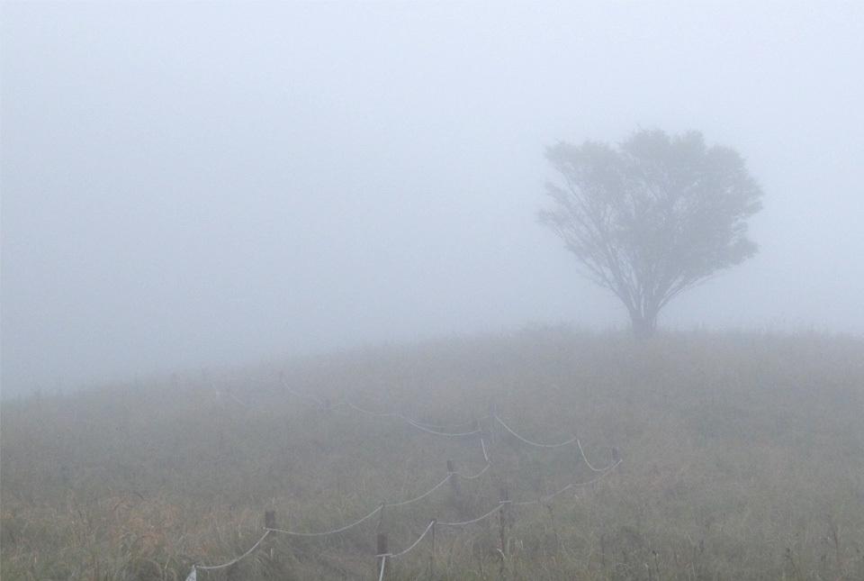 5535 霧の中 960×645
