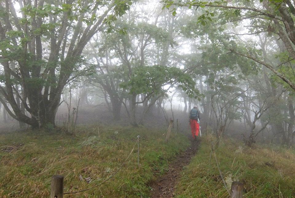 5592 霧の中を歩く 960×645