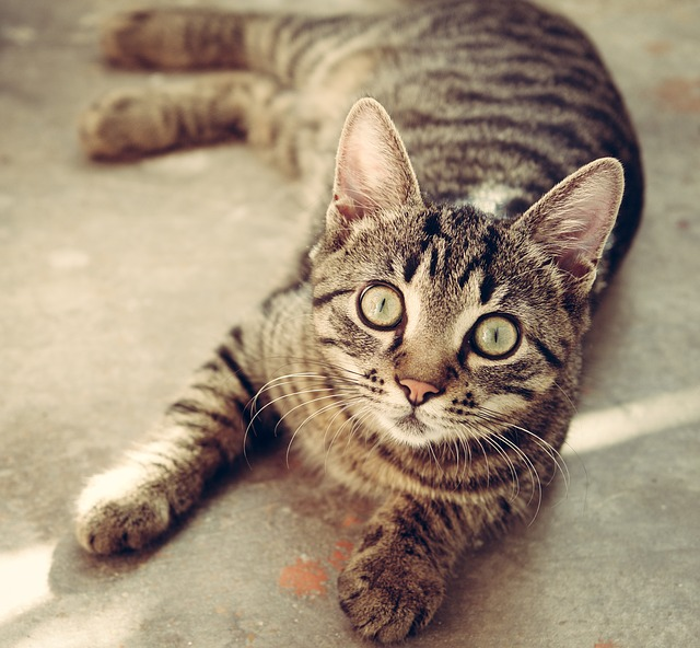 cat-618470_640.jpg