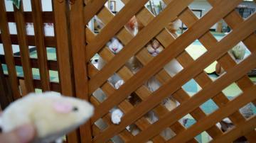 ネズミのおもちゃはただの獲物! 前編 2