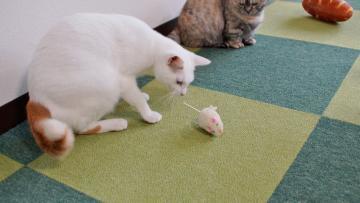 ネズミのおもちゃはただの獲物! 後編 1