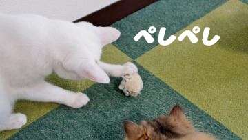 ネズミのおもちゃはただの獲物! 後編 2