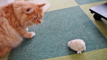ネズミのおもちゃはただの獲物! 後編 3
