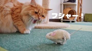 ネズミのおもちゃはただの獲物! 後編 4