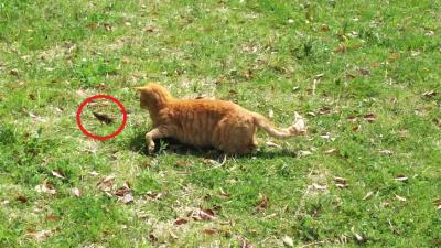 cat2 - コピー